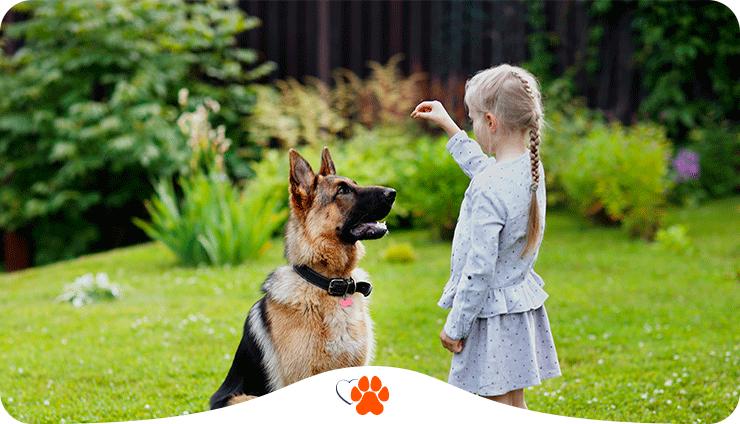 Як самостійно дресирувати собаку: основні команди та правила відпрацювання