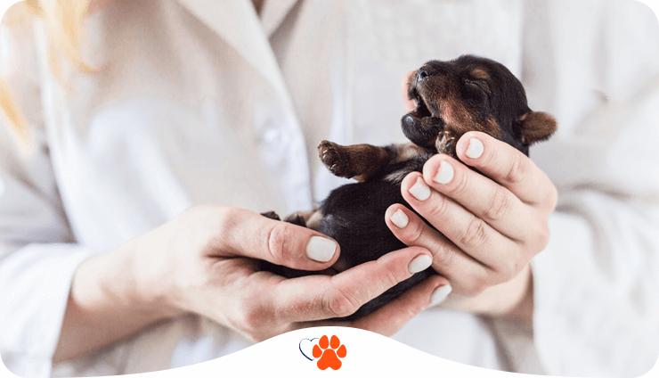 dog-childbirth-3-1