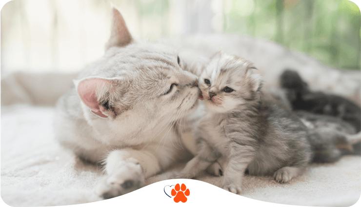 Чем кормить котенка в первые три месяца?