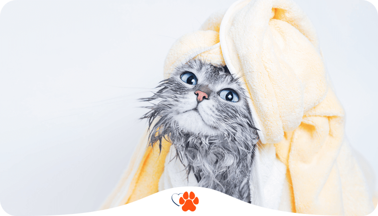 Мокре питання: як купати кота?