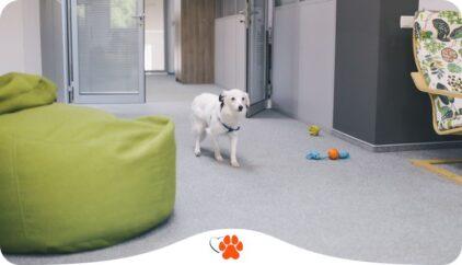 Как подготовить собаку к офису