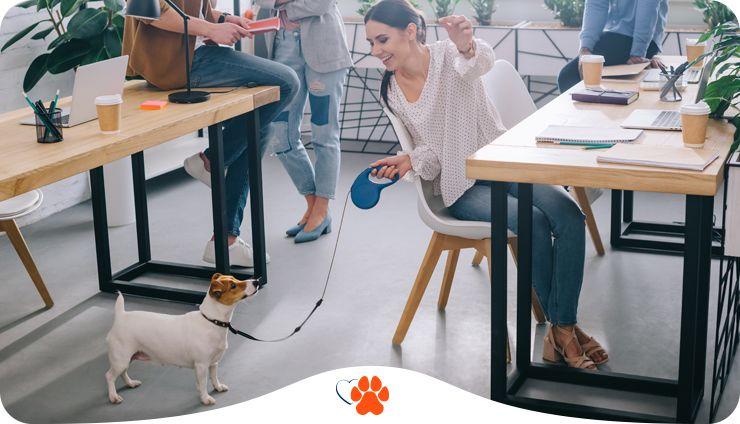 Каким собакам не стоит ходить в офис