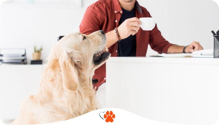 Готов ли ваш офис стать dog-friendly