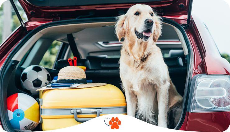 Подорожуємо з собакою