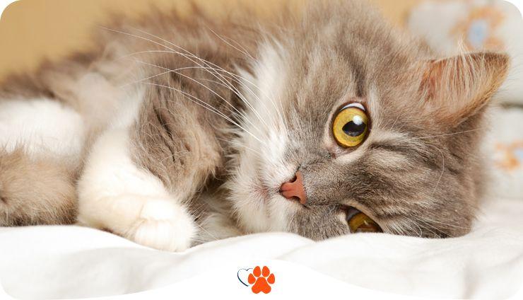 Киця каже няв. Як спілкуються коти