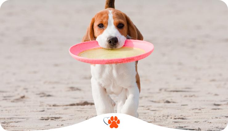 10 советов будущим владельцам собаки