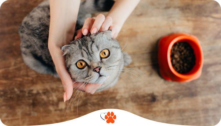 Сухий чи вологий — як обрати корм для кота