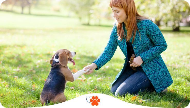 Навіщо навчати собаку і як це робити без насильства