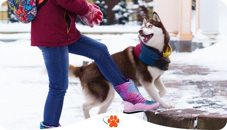Как заботиться о собаке зимой. 10 правил