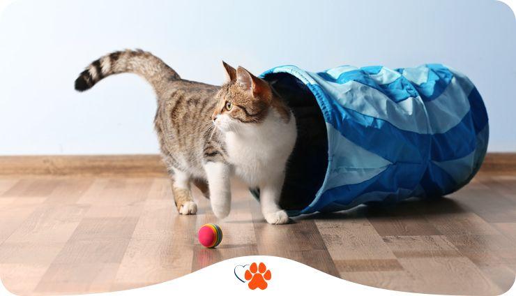 Как и зачем дрессировать кошку. 6 полезных команд