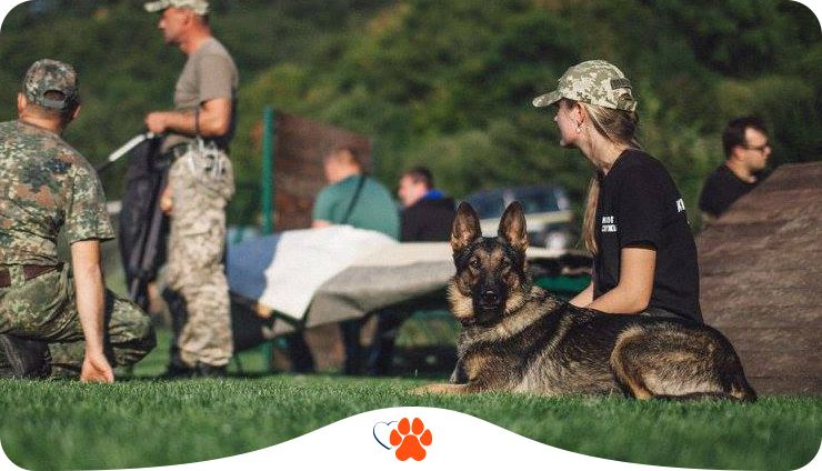Собаки на службе. Как четырехлапые защищают Украину