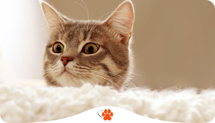 Почему коты и кошки мурчат
