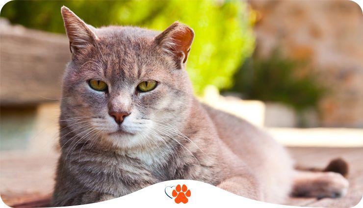 Скільки років живуть коти – основні фактори, що впливають на тривалість котячого життя