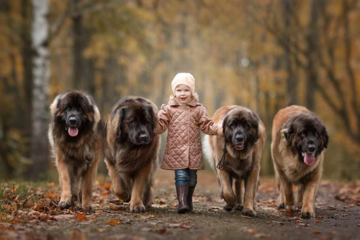 Большие породы собак. Топ-10 больших собак