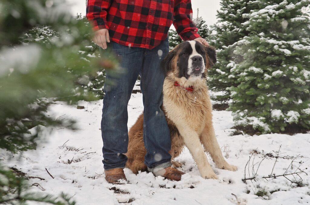 a-dog-and-his-man-VCXKSLE