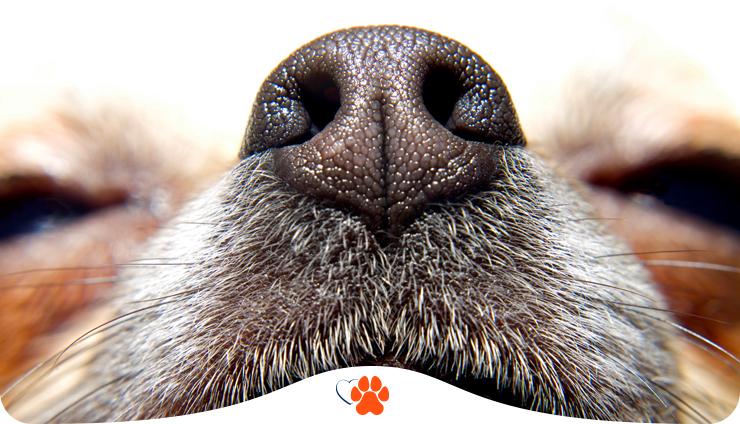 Я вас внимательно нюхаю. Все о запаховой коммуникации собак