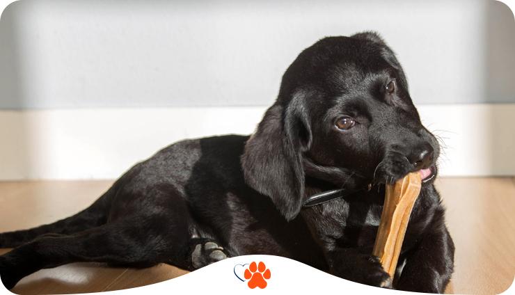 Как отучить щенка кусаться — 5 советов