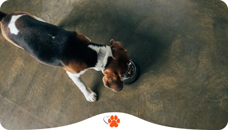 Собака не ест: причины почему собака отказывается от еды