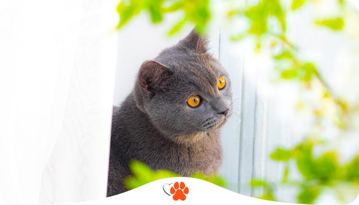 Как видят кошки. Особенности зрения котов