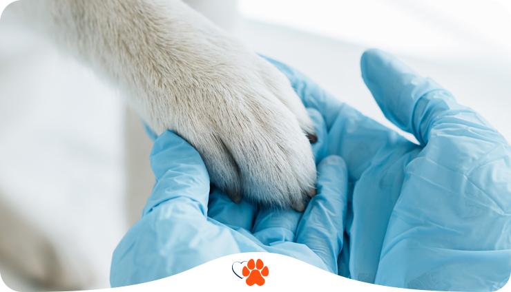 Как выбрать ветеринарного врача