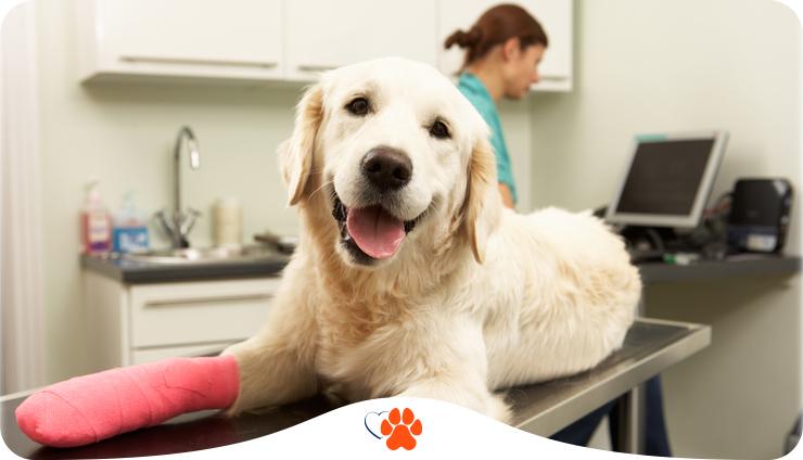 Как понять, что ветеринар — профи